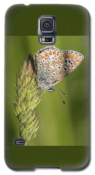 Brown Argus Galaxy S5 Case