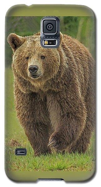 Brown Bear 1 Galaxy S5 Case