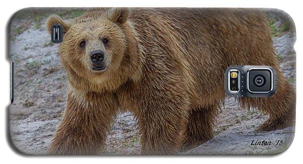Brown Bear 3 Galaxy S5 Case
