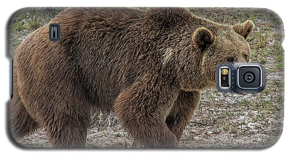 Brown Bear 6 Galaxy S5 Case