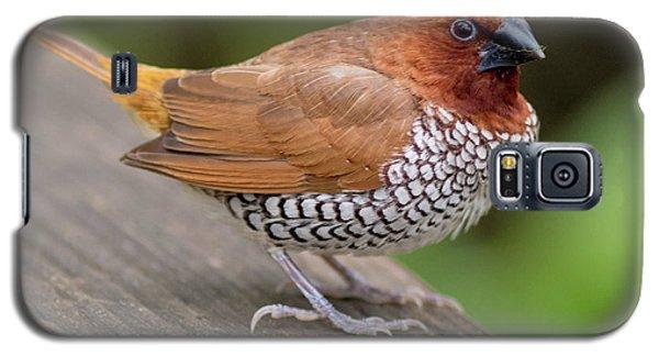Brown Bird Galaxy S5 Case