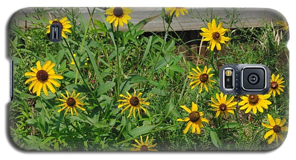 Brown Eyed Susans Galaxy S5 Case by Robyn Stacey