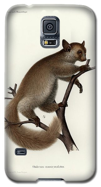 Brown Greater Galago Or Thick-tailed Bushbaby Galaxy S5 Case