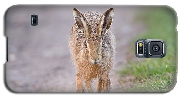 Brown Hare Approaching Down Track Galaxy S5 Case