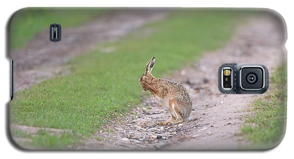 Brown Hare Cleaning Galaxy S5 Case