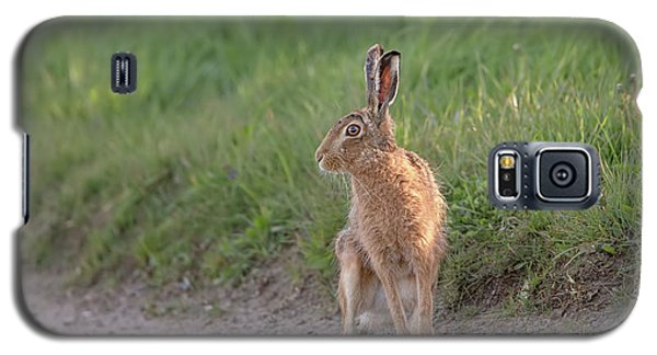 Brown Hare Listening Galaxy S5 Case