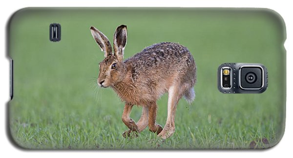 Brown Hare Running Galaxy S5 Case