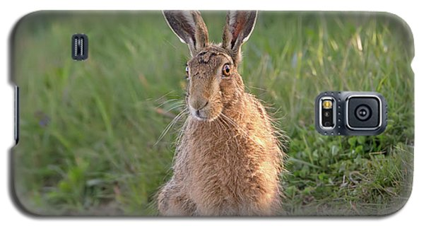 Brown Hare Sat On Track At Dawn Galaxy S5 Case