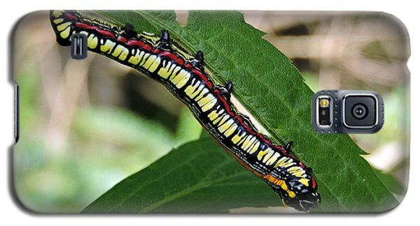 Brown Hooded Owlet Moth Larva  Galaxy S5 Case