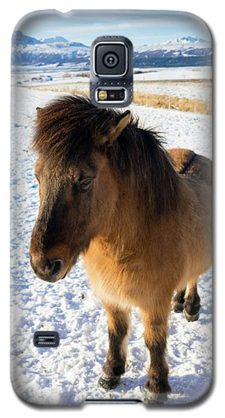Galaxy S5 Case featuring the photograph Brown Icelandic Horse In Winter In Iceland by Matthias Hauser
