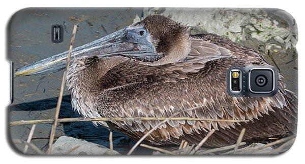 Brown Pelican 3 March 2018 Galaxy S5 Case