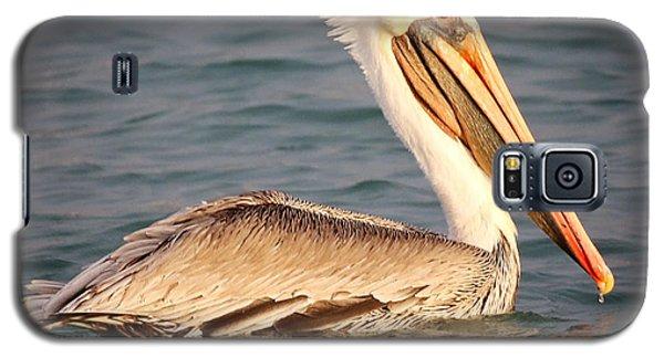 Brown Pelican Floating Galaxy S5 Case