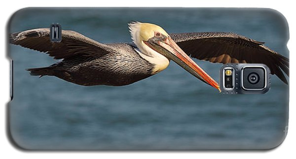 Brown Pelican Flying By Galaxy S5 Case by Max Allen
