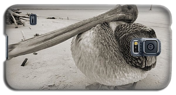 Brown Pelican Folly Beach Morris Island Lighthouse Close Up Galaxy S5 Case