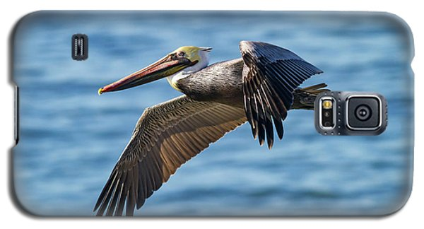 Brown Pelican In Flight Galaxy S5 Case