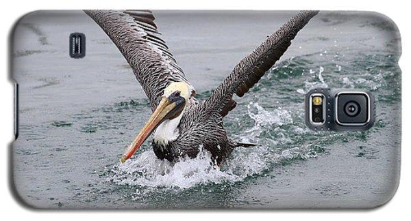 Brown Pelican Landing On Water . 7d8372 Galaxy S5 Case