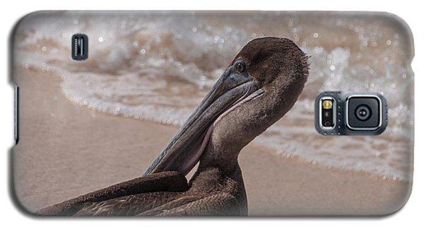 Brown Pelican On Las Bachas Beach Santa Cruz Indefatigable Island  Galapagos Islands Galaxy S5 Case