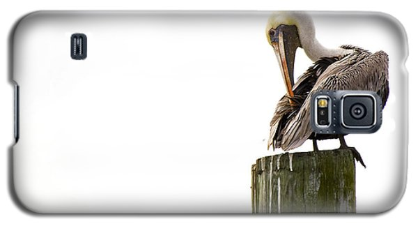 Galaxy S5 Case featuring the photograph Brown Pelican On Piling by Bob Decker