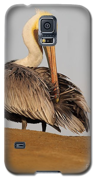 Galaxy S5 Case featuring the photograph Brown Pelican Preening Feathers On Shifting Sands by Max Allen