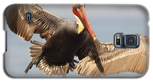 Galaxy S5 Case featuring the photograph Brown Pelican Putting On The Brakes by Max Allen