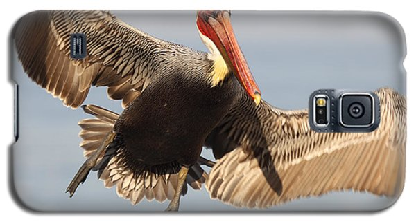 Brown Pelican Putting On The Brakes Galaxy S5 Case by Max Allen