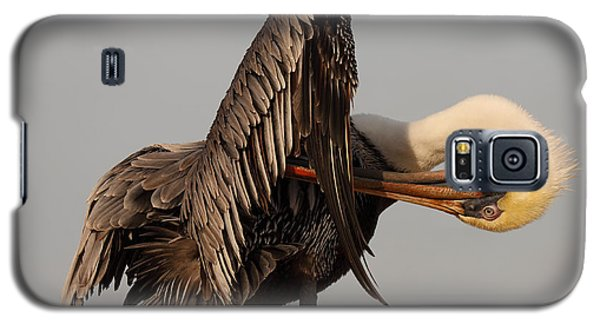 Galaxy S5 Case featuring the photograph Brown Pelican With An Acrobatic Lean And Preen by Max Allen