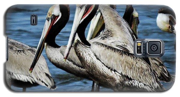 Brown Pelicans Preening Galaxy S5 Case