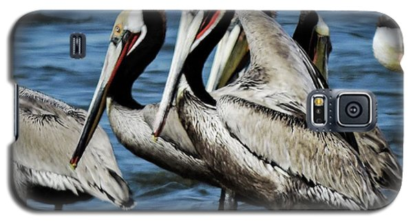 Brown Pelicans Preening Galaxy S5 Case