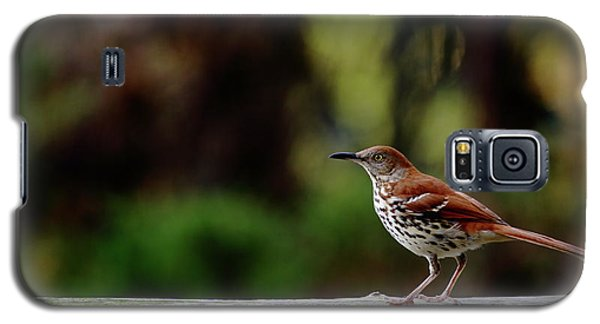 Brown Thrasher Facing East Galaxy S5 Case