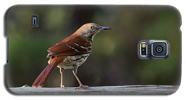 Brown Thrasher Facing West Galaxy S5 Case