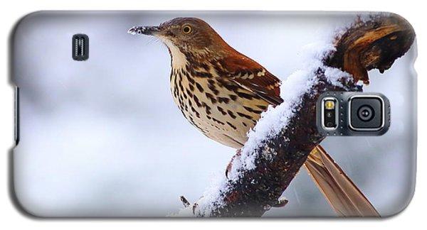 Brown Thrasher In Snow Galaxy S5 Case