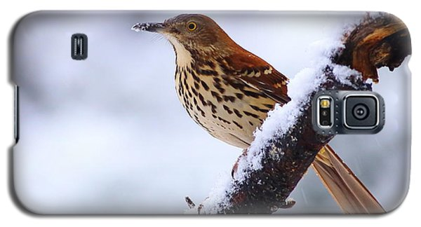 Brown Thrasher In Snow Galaxy S5 Case