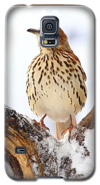 Brown Thrasher With Snow  Galaxy S5 Case