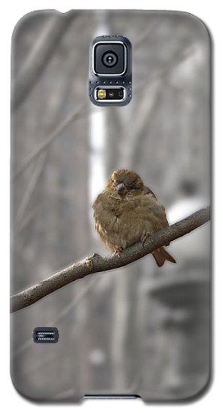 Bryant Park Bird Nyc Galaxy S5 Case