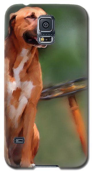 Buck Galaxy S5 Case by Colleen Taylor
