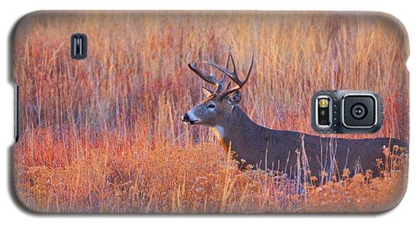 Buck Deer In Morning Sunlight Galaxy S5 Case