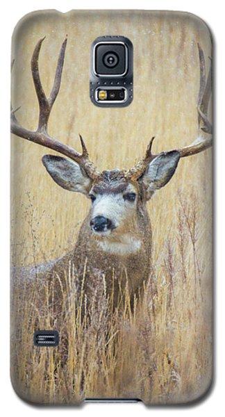 Buck In Snow Galaxy S5 Case