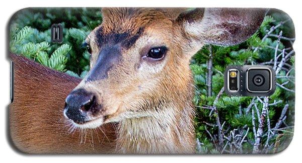 Buck In Velvet Galaxy S5 Case