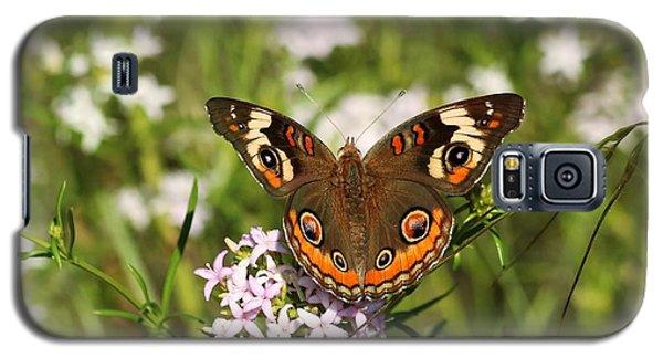 Buckeye Butterfly Posing Galaxy S5 Case