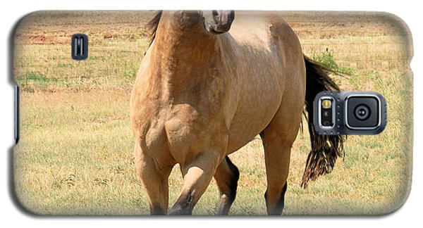 Buckskin Stallion From Front Galaxy S5 Case