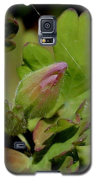 Bud And Spider Silk Galaxy S5 Case