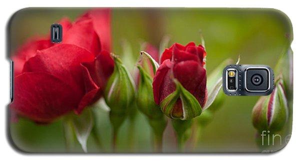 Bud Bloom Blossom Galaxy S5 Case by Mike Reid