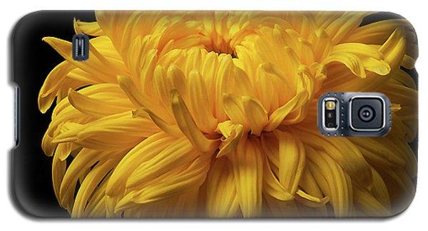 Bud Opening-chrysanthemum 'allison Peace Galaxy S5 Case