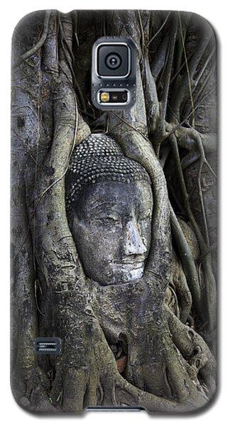 Buddha Head In Tree Galaxy S5 Case by Adrian Evans