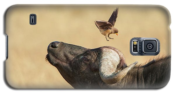 Buffalo And Oxpecker Bird Galaxy S5 Case by Phyllis Peterson