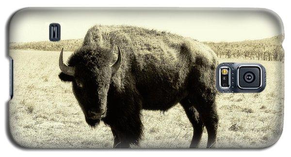 Buffalo In Sepia Galaxy S5 Case