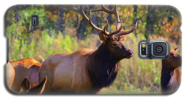 Buffalo River Elk Galaxy S5 Case