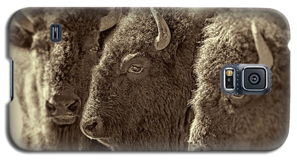 Galaxy S5 Case featuring the photograph Trio American Bison Sepia Brown by Jennie Marie Schell