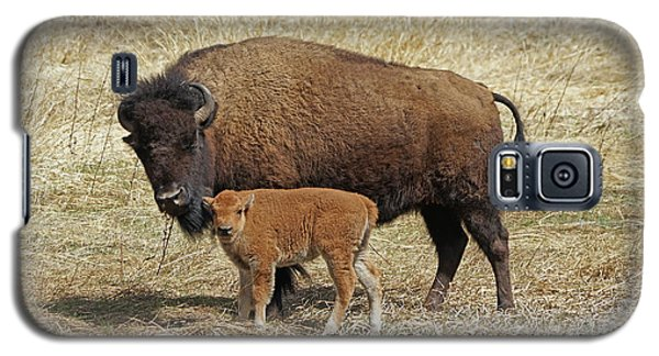 Buffalo With Newborn Calf Galaxy S5 Case