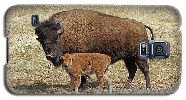 Buffalo With Newborn Calf Galaxy S5 Case